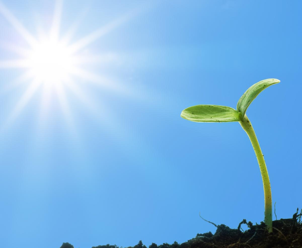 рассказываем картинки ростка цветка турки готовят
