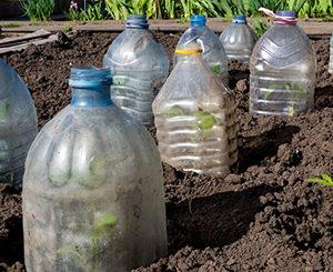 Как уберечь растения от заморозков весной